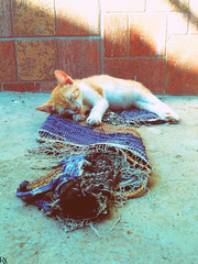 Cats Edition 8 - (28) (Robert Krstevski) Tags: robertkrstevskiblogspotcom robertkrstevski cat pet pets animal animals animallovers animalslove lovely filter filters color colors kitty kitten kittens kitties cute cuteness gato gatos popular macedonia catsedition8 lachatte chatte