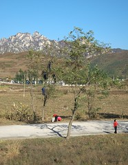 Picking up fruits (Frühtau) Tags: dprk north korea rural countryside land landscape nature street path ground high korean people leute asia asian east nordkorea passers by kids children picking fruits tree baum climb scenery 朝鲜 朝鮮 cháoxiān 地 outdoor корея северная كوريا الشمالية 北朝鮮 corea del norte corée du nord coreia do coréia เกาหลีเหนือ βόρεια κορέα culture scene szene personen