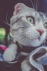 IMG_0198 (Kevin---007) Tags: couple cat pard green grass por portrait