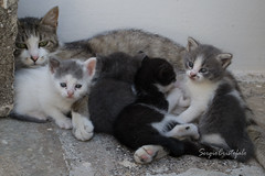 Ramiro's Pickneys (Shooting in RAW) Tags: gattini gatto gatti grigionkon sergio sandonato d3100 disegno dipinto digital flickr felini fantasia nikon ramiro