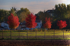 Urban colors (Robyn Hooz (away)) Tags: padova alberi rosso colori red yellow autunno campo field pali posts veneto italy