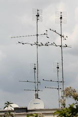 reunion (infra.rossi) Tags: birds rooftop reunion swallow antennas aerial urban nofilter rome summer contrast
