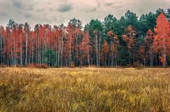 Wrd drzew.. (tyranus_86) Tags: nikon nikonnature naturephotography naturephoto nikonpoto natura nature nikond3200 d3200 day rainy city cityscape colors autumn sky clouds las forest