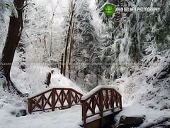 Fresh Powder (john bulmer) Tags: statepark morning winter snow photoshop fresh digitalpainting spa