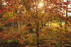 Herfst (Hengelo Henk) Tags: autumn wandelen herfst twente cirkels mander