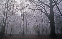 Dimanche matin brumeux au parc. (jmsatto) Tags: parc brume essonne lesulis