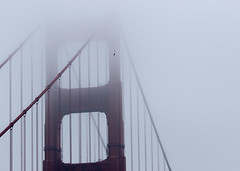 Sail (Michael Dunn~!) Tags: sanfrancisco bridge bird fog goldengatebridge suspensionbridge ggb photowalking karlthefog photowalkingsolo photowalking20150111
