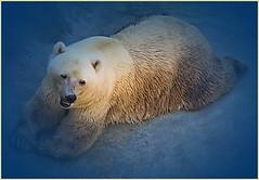 A big teddy bear (kontinova2) Tags: ngc coth5