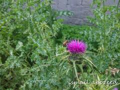 ٢٠١٥٠٢٢٤_١٤١١٠٠ (ismail abozeed) Tags: ورود صورة ورده رائعة نحلة بنفسج اسماعيلابوزيد