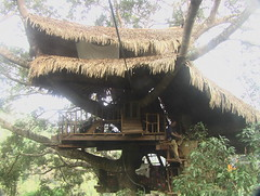 Treehouse in Bokeo Nature Reserve