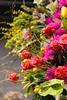 flower show (1) (pompomflipflop) Tags: philadelphia flowershow