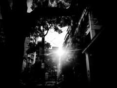 Locking up the sun (Sakib Mridha) Tags: urban bw sun building tree blackwhite afternoon dhaka bangladesh afternoonsun urbanlife dhanmondi