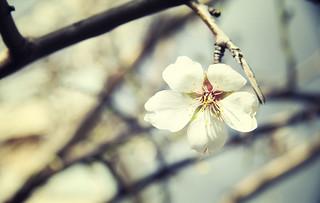 En invierno se echan de menos las primaveras [EXPLORE]