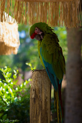 """Parrot • <a style=""""font-size:0.8em;"""" href=""""http://www.flickr.com/photos/92159645@N05/16234995945/"""" target=""""_blank"""">View on Flickr</a>"""