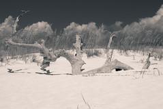 20140813 93116-2.jpg (ginjer) Tags: family vacation beach florida driftwood destin eglinafb