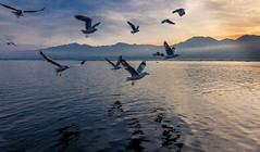 Flying Dreams (Light Engraver) Tags: mountain lake water birds sunrise flying burma seagull dream myanmar inle yangoon nyaungshwe