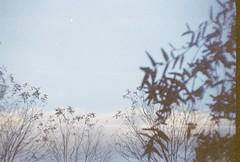 (moscardalardan.biri) Tags: light sky cloud color tree film analog 35mm grain 35mmfilm analogue fuji200 fujicolor vilia analogonly
