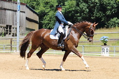 IMG_4888 (dreiwn) Tags: horse pony horseshow pferde pferd equestrian horseback reiten horseriding dressage reitturnier dressur reitsport dressyr dressuur ridingclub ridingarena pferdesport reitplatz reitverein dressurreiten dressurpferd dressurprüfung tamronsp70200f28divcusd jugentturnier