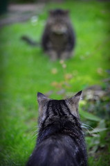 _High Noon (SpitMcGee) Tags: pet cat teddy western highnoon kater minou spitmcgee begegnungimgarten 1200uhrmittags