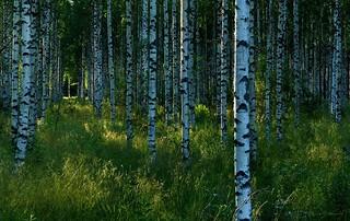 Pohjois-Karjala