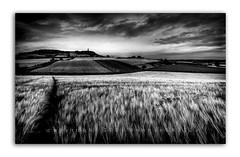 The Interlopers   [Explored] (RonnieLMills) Tags: interlopers barley field moate road newtownards comber scrabo tower cloudy skies farming agriculture tractor lines potatoes patchwork fields blackandwhite mono monochrome landscape county down northern ireland explore explored 5816 31