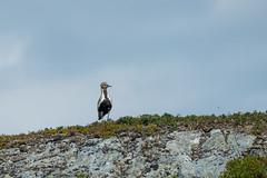 P7230440 (vekkan) Tags: borgefjell norja vaellus