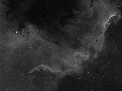 NGC7000 North America Nebula. (__Aenima__) Tags: astronomy astrophotography asi120mc astronomik cygnus deepskyobject dso ed80 emission eq6 filter halpha ha hydrogen alpha image skywatcher longexposure mono mosaic nebula narrowband night ngc7000 wall north america ccd atik processed stacking neq6 refractor finderguider finderscope phd2 space stars sky constellation telescope eq mount backyard zwo astrometrydotnet:id=nova1644056 astrometrydotnet:status=solved