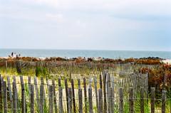 fences (mfauscette) Tags: 35mm fsc ishootfilm istillshootfilm kodak kodakportra800 nikon nikonf6 analog asburypark beach dunes film filmisnotdead filmshooterscollective jerseyshore ocean
