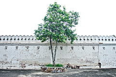 Lonesome tree (theloonybard) Tags: nature travel traveller photography architecture abstract art india color minimal history monument building black white green tree window wall stone adventure arch door