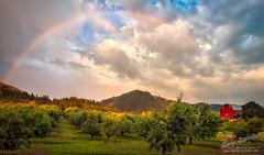 Rainbow Orchard (Gary Randall) Tags: gar47682 oregon hoodriver rainbow weather farm barn orchard rain sunset