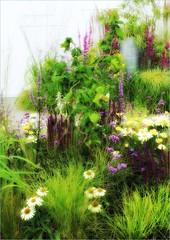 Garden Display (robin denton) Tags: rhs tattonpark flowershow flowers 2016 rhstattonparkflowershow niksoftware