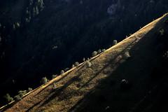 Pente — massif de l'Authion, Alpes-Maritimes, août 2016 (Stéphane Bily) Tags: stéphanebily alpesmaritimes authion pente montagne soleil