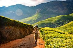 Kolukkumalai, Highest tea plantations, Munnar, Kerala, India (CamelKW) Tags: kolukkumalai highest teaplantations munnar kerala india 2014