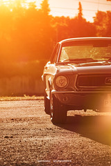 68 Mustang Coupe I (Dejan Marinkovic Photography) Tags: 1968 ford mustang coupe pony car american classic backlight gegenlicht lensflare