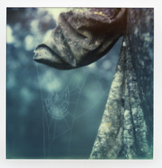 The traces (Skink74) Tags: angel cemetery colorsx70 england film graves hampshire hursley impossibleproject instant monument polaroid polaroidlandcamera sculpture sx70 sx70alpha1se uk web spider blur autumn mist polaroidweek2016 roidweek