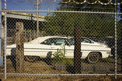 Longing to be free (mediageek) Tags: cadillac convertible eldorado portland fence