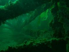 PA060443.jpg (Michael Bartosek) Tags: olympusepl3 catalinaisland olympus1442mm underwater catalina diving california pacificocean