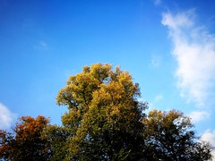 2016-10-22_04-34-54 (txchris86) Tags: bume trees baumkronen baumkrone himmel sky blau blue clouds herbst autumn herbstszene autumnszenery edited natur nature treetops treetop day tagsber sunny sonnig colourful farbenfroh minimal minimalistisch