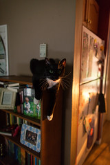 on the ledge (KieraJo) Tags: wide angle canonef24mmf14liiusm l lens canon 5d mark 3 iii 5d3 fullframe dslr home inside sunset warm light cat bookshelf cute picasso tuxedo black white paws
