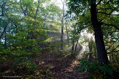 Light impressions (fbferreira) Tags: sunlight sonnenlicht luz do sol floresta bume trees forest wald thringen distagont2821 ze nature canon5dmkii