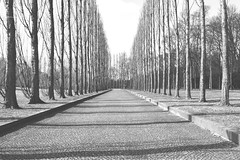Avenue (ericgrhs) Tags: avenue allee trees berlin