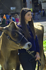 Her Cow (swong95765) Tags: cow girl lady contestant bovine animal