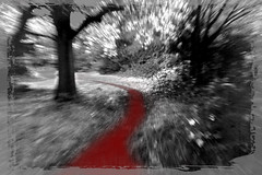 Halloween Blood Path (Chris Sinfield) Tags: eerie halloween blood blackandwhite trees trail bushes scary dark border red