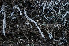 Cold (Leonardo Marson Photography) Tags: world cold canon frost mud small hard ground brina tires freeze tall piccolo alto freddo duro pneumatici mondo terreno fango 70d congelare vsco destrutturalizzato
