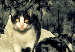 IMG_0023 (Stefania.Coreno) Tags: italy cats cat canon chat katzen gatti greatphotographers potd:country=it