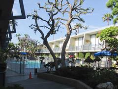 1167 Travelodge LAX (mari-ten) Tags: california building tree nature pool hotel la losangeles unitedstates northamerica 2014 losangelescounty 201405 20140504 travelodgehotellax