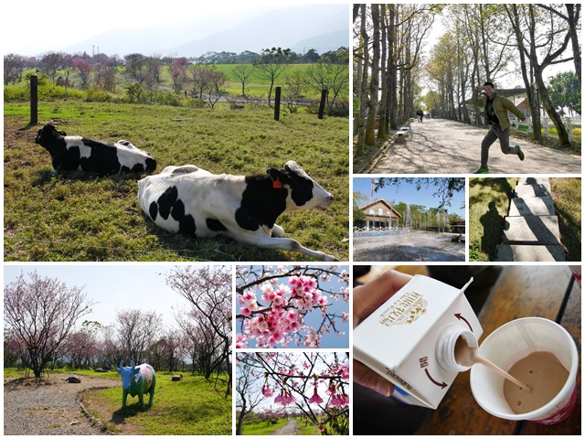 台東美食景點初鹿牧場初鹿鮮乳鮮奶櫻花祭放山雞伴手禮page