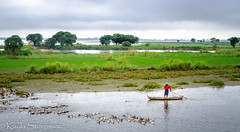 Duck Herder (Kayla Stevenson) Tags: lake water boats myanmar amarapura ubeinbridge taungthamanlake duckherder