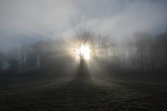 DSC_2710 Magisches Auge... - Magic Eye ... (baerli08ww) Tags: light sun mist fog germany landscape deutschland licht spring day nebel tag landschaft sonne wald frühling morningsun rheinlandpfalz morgensonne westerwald rhinelandpalatinate maxsain westerforest