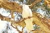Audley Park Bird (everyday sh⊙_☉ter) Tags: park beach forest sydney waterfalls kookaburra wattamolla garie royalnationalpark audley stanwell hackerriver